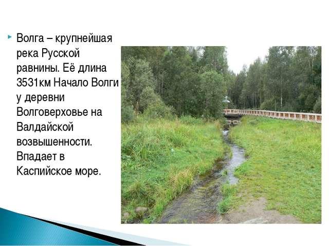 Волга – крупнейшая река Русской равнины. Её длина 3531км Начало Волги у дерев...