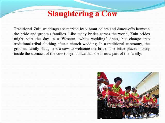 Slaughtering a Cow Traditional Zulu weddings are marked by vibrant colors and...