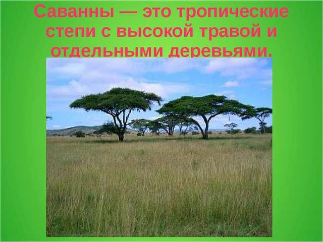 Саванны — это тропические степи с высокой травой и отдельными деревьями.