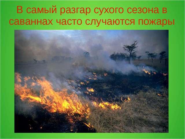 В самый разгар сухого сезона в саваннах часто случаются пожары
