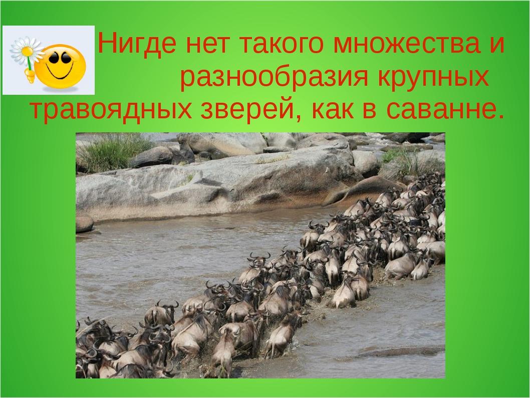 Нигде нет такого множества и разнообразия крупных травоядных зверей, как в с...