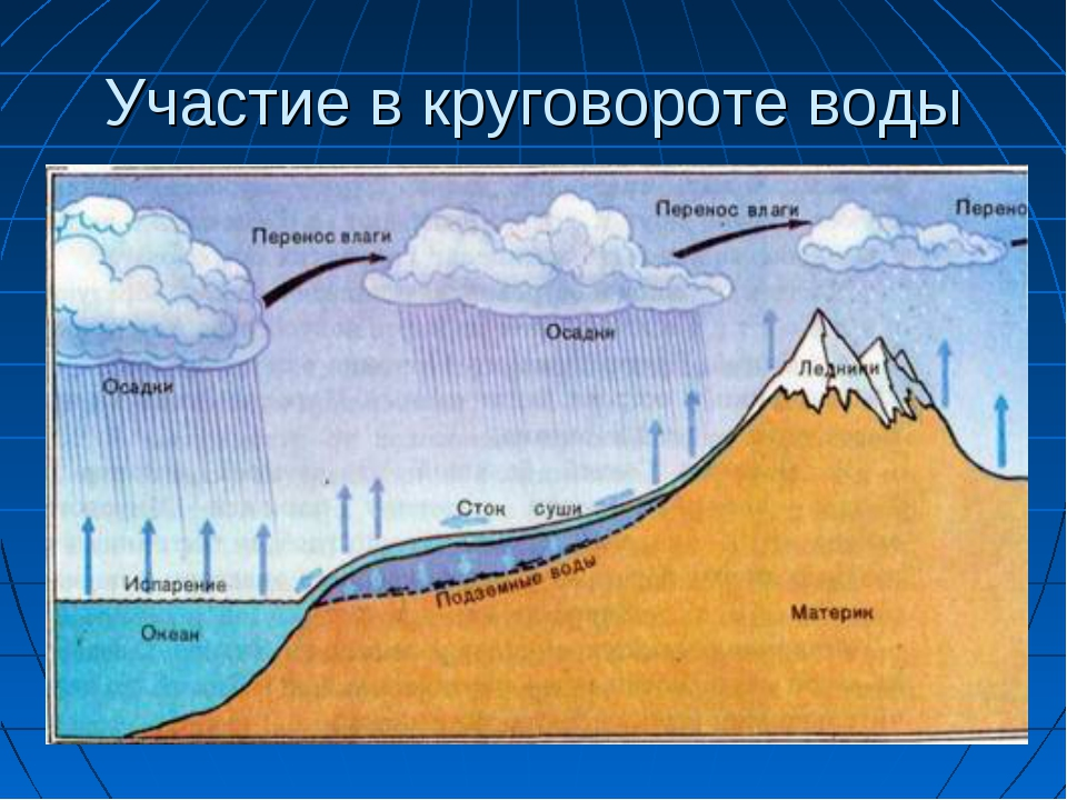 Участие в круговороте воды
