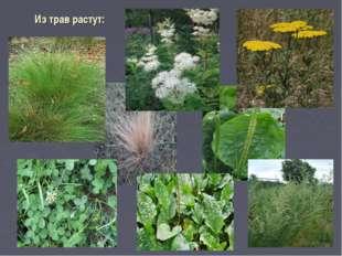 Из трав растут: