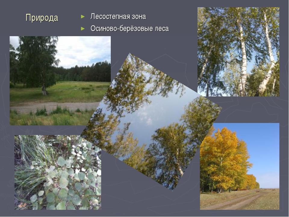 Природа Лесостепная зона Осиново-берёзовые леса