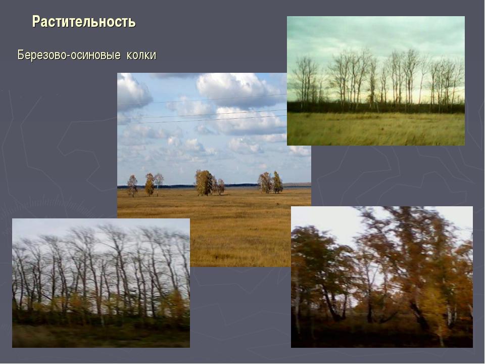Растительность Березово-осиновые колки