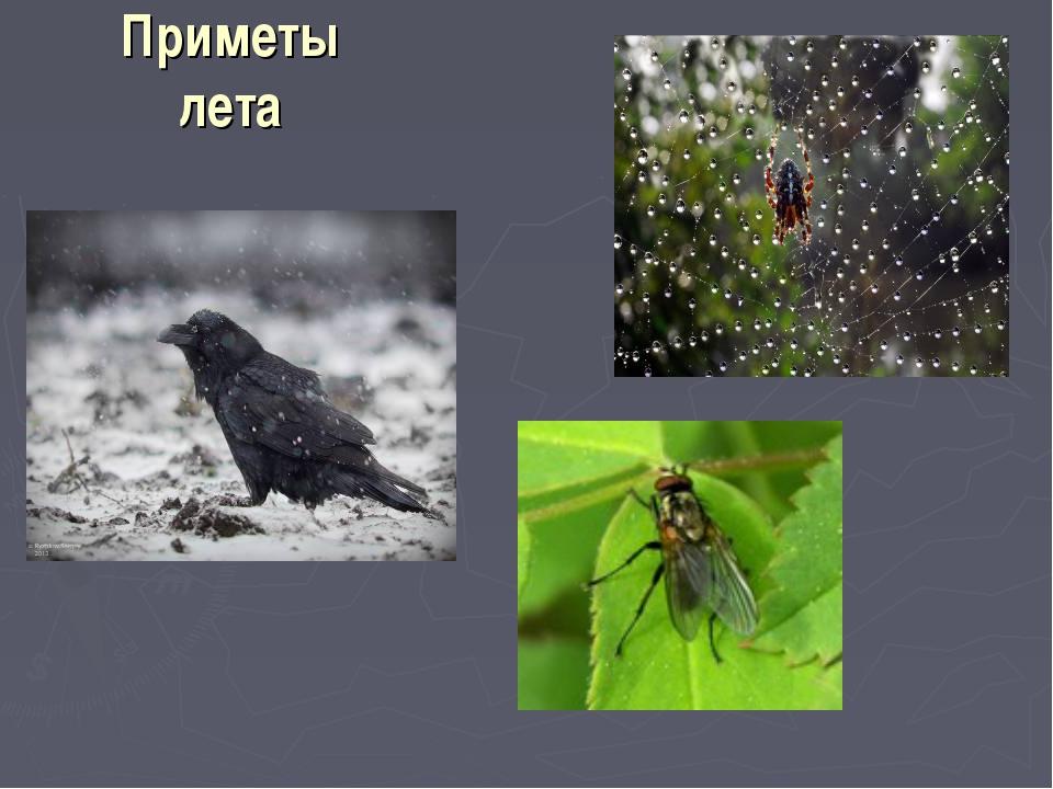 Приметы лета