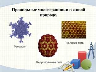 Правильные многогранники в живой природе. * Пчелиные соты Вирус полиомиелита