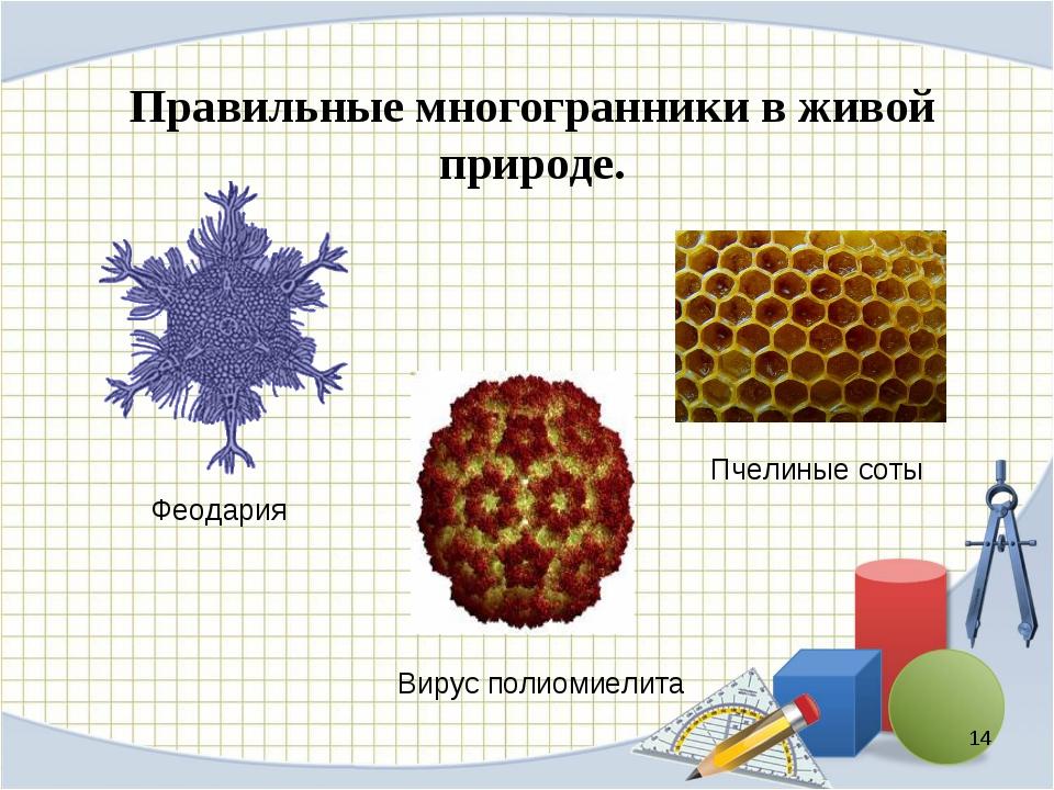 Правильные многогранники в живой природе. * Пчелиные соты Вирус полиомиелита...