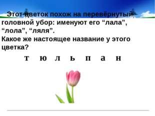 """Этот цветок похож на перевёрнутый головной убор: именуют его """"лала"""", """"лол"""