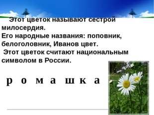 Этот цветок называют сестрой милосердия. Его народные названия: поповник,