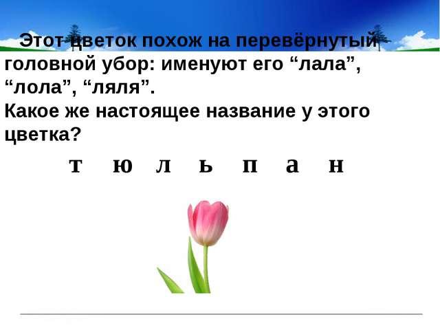 """Этот цветок похож на перевёрнутый головной убор: именуют его """"лала"""", """"лол..."""