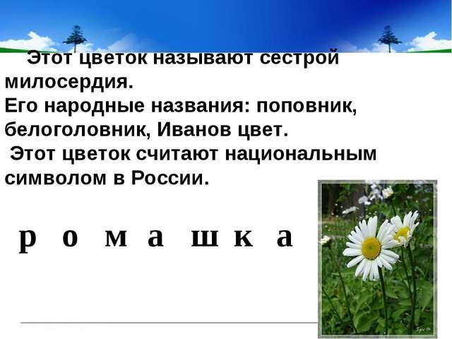 Этот цветок называют сестрой милосердия. Его народные названия: поповник,...