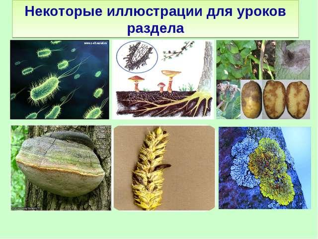 Некоторые иллюстрации для уроков раздела