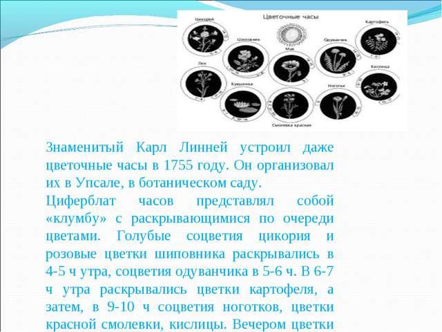 Знаменитый Карл Линней устроил даже цветочные часы в 1755 году. Он организова...