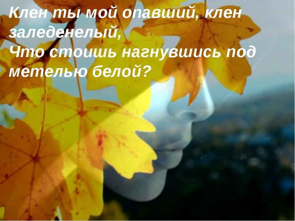 Клен ты мой опавший, клен заледенелый, Что стоишь нагнувшись под метелью бел...