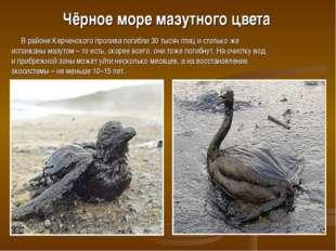 Чёрное море мазутного цвета В районе Керченского пролива погибли 30 тысяч пти