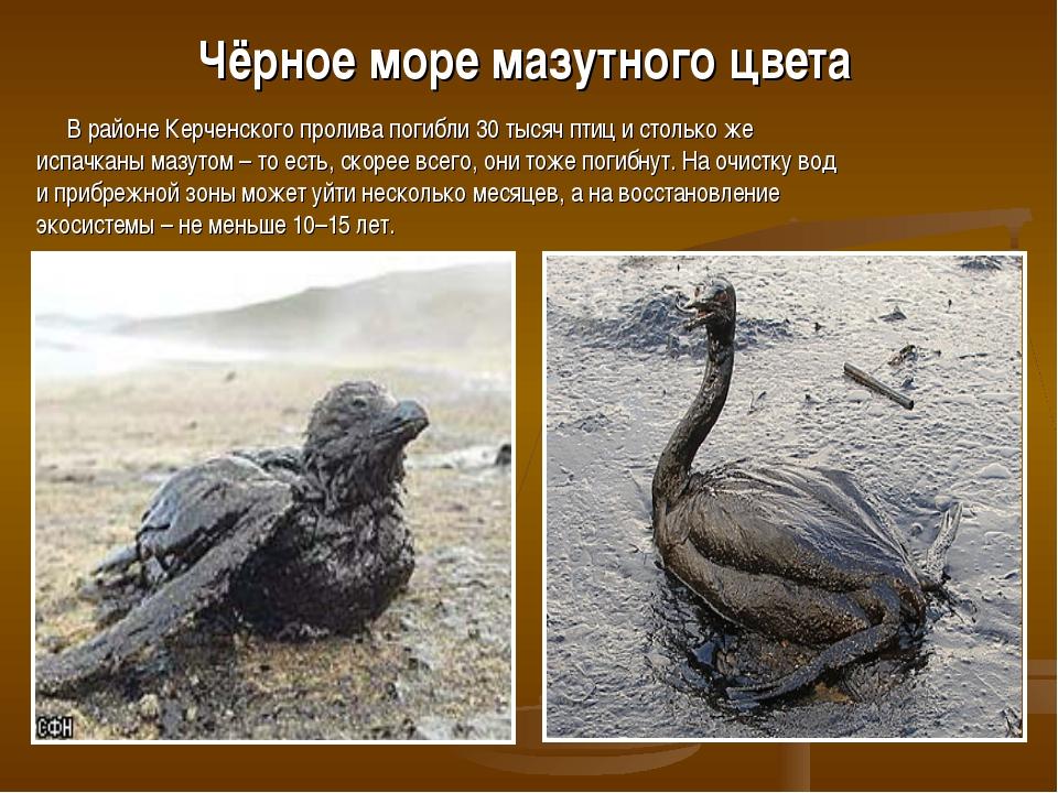 Чёрное море мазутного цвета В районе Керченского пролива погибли 30 тысяч пти...