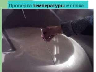Проверка температуры молока