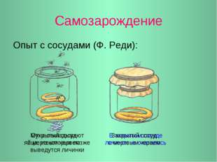 Самозарождение Опыт с сосудами (Ф. Реди): Мухи откладывают яйца, из которых п