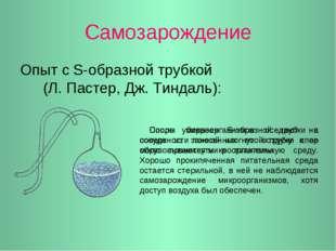Самозарождение Опыт с S-образной трубкой (Л. Пастер, Дж. Тиндаль): Споры микр