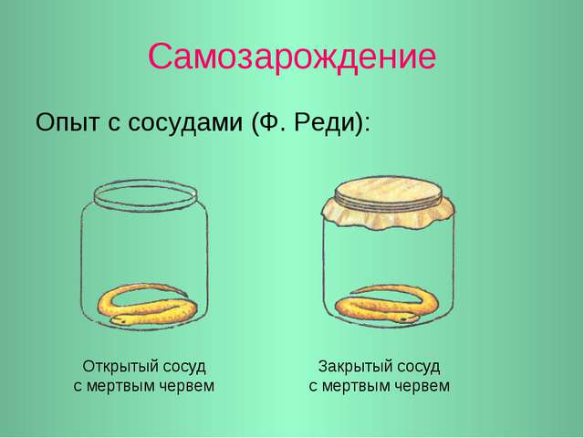 Самозарождение Опыт с сосудами (Ф. Реди): Открытый сосуд с мертвым червем Зак...
