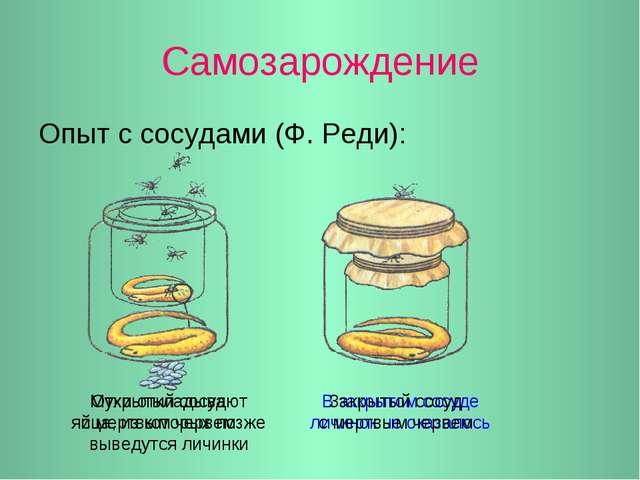 Самозарождение Опыт с сосудами (Ф. Реди): Мухи откладывают яйца, из которых п...