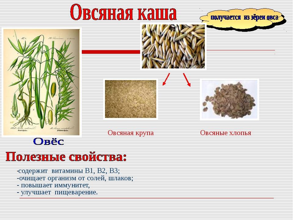 -содержит витамины B1, В2, В3; -очищает организм от солей, шлаков; - повышает...