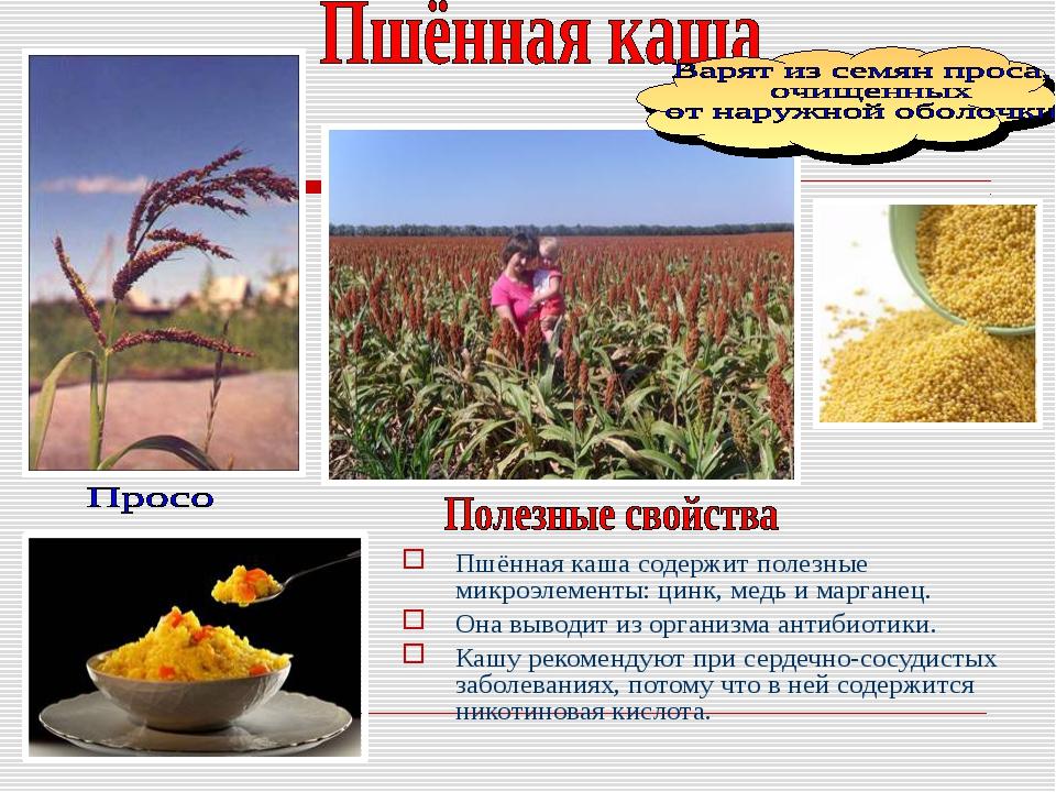 Пшённая каша содержит полезные микроэлементы: цинк, медь и марганец. Она выво...