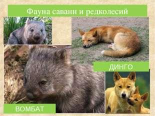 ВОМБАТ Фауна саванн и редколесий ДИНГО