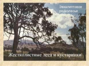 Жестколистные леса и кустарники Эвкалиптовое редколесье