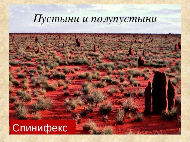 Пустыни и полупустыни Спинифекс