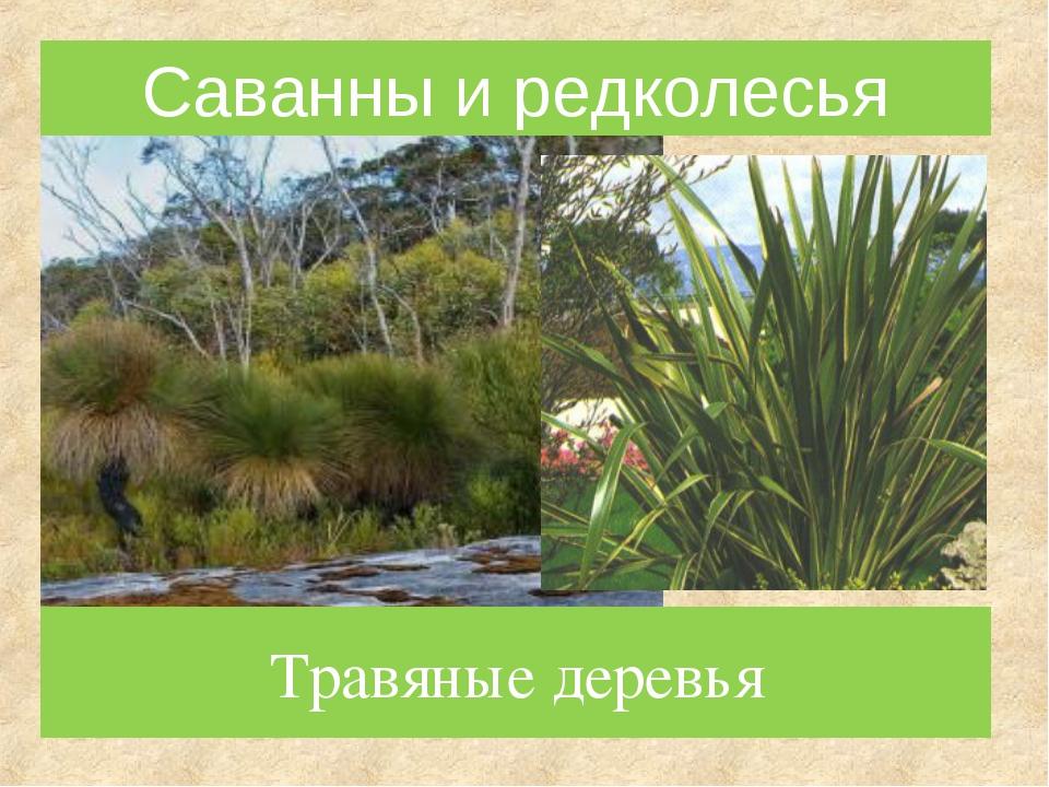 Травяные деревья Саванны и редколесья