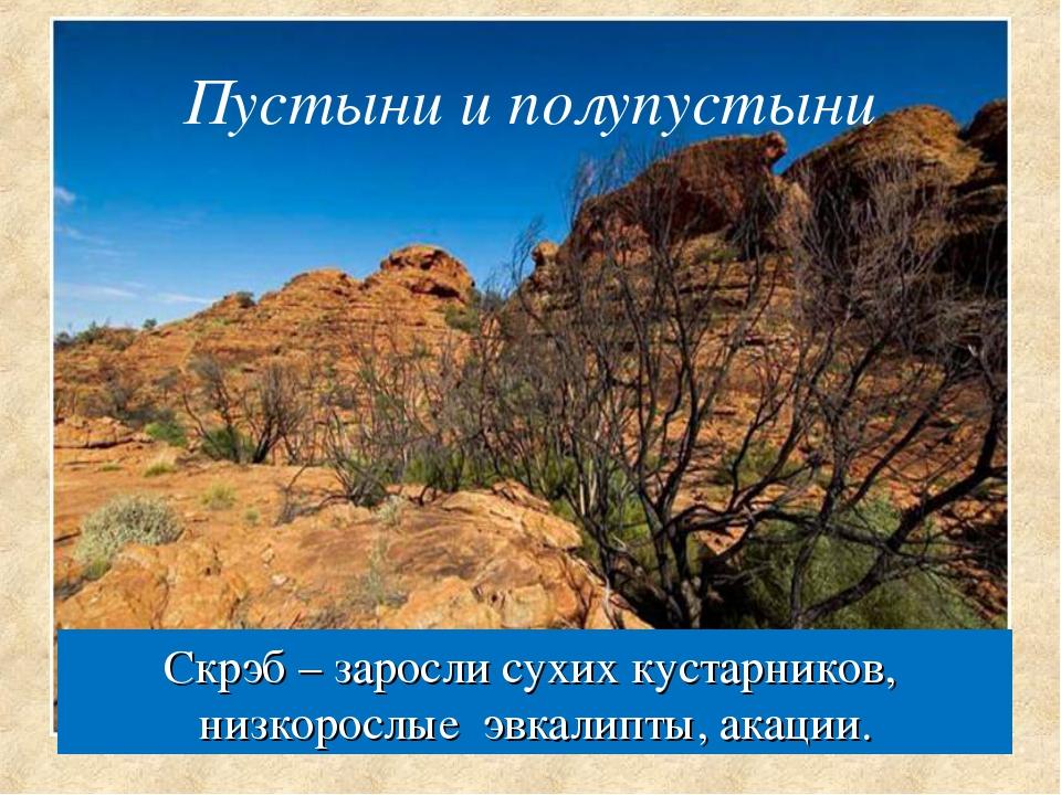 Скрэб – заросли сухих кустарников, низкорослые эвкалипты, акации. Пустыни и п...