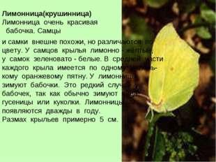 Лимонница(крушинница) Лимонница очень красивая бабочка. Самцы и самки внешне