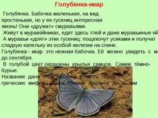 Голубянка-икар Голубянка.Бабочкамаленькая,навид простенькая, ноуеегус