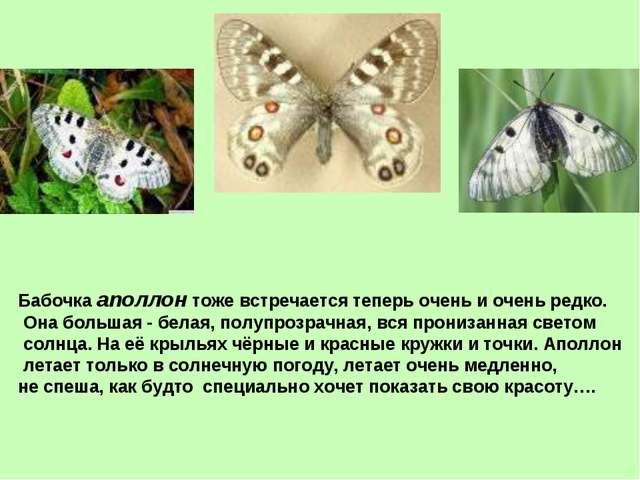 Бабочка аполлон тоже встречается теперь очень и очень редко. Она большая - бе...