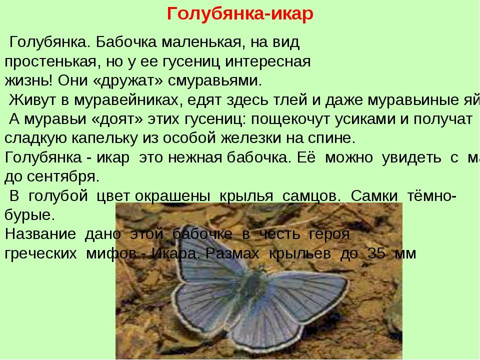 Голубянка-икар Голубянка.Бабочкамаленькая,навид простенькая, ноуеегус...