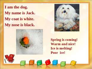 I am the dog. My name is Jack. My coat is white. My nose is black. Spring is
