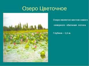 Озеро Цветочное Озеро является местом самого северного обитания лотоса Глубин