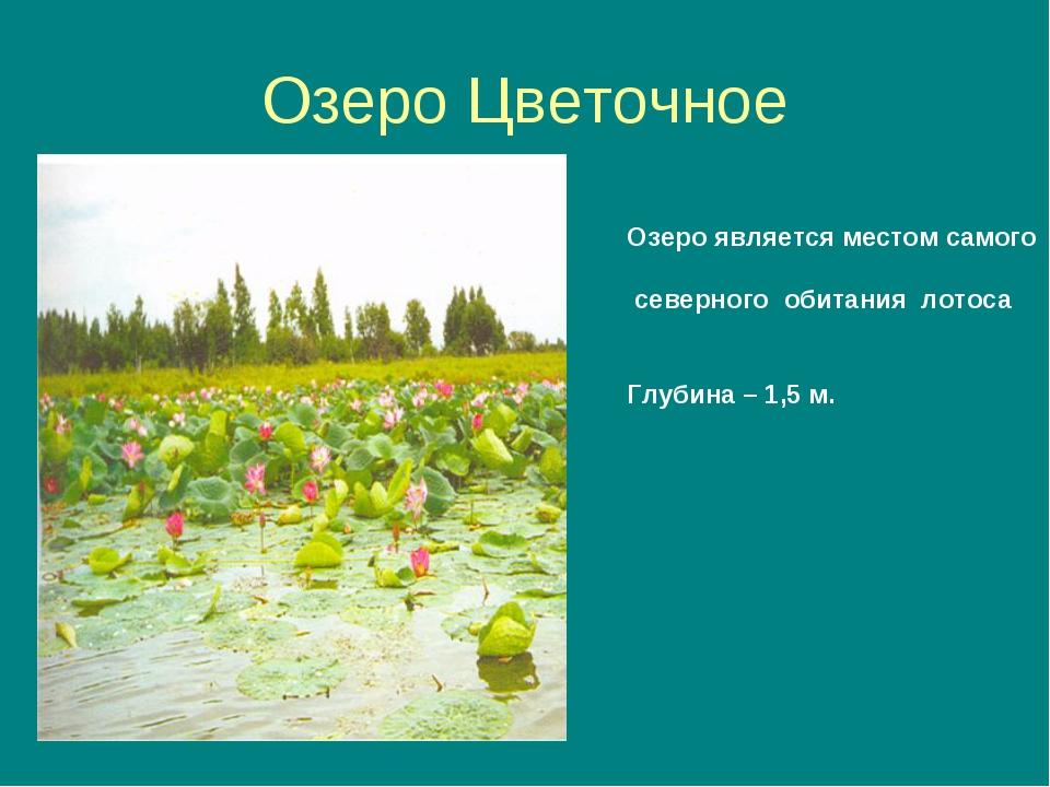 Озеро Цветочное Озеро является местом самого северного обитания лотоса Глубин...