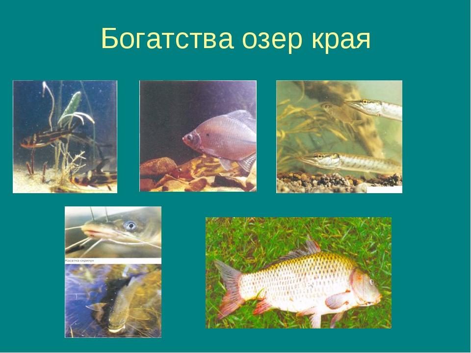 Богатства озер края
