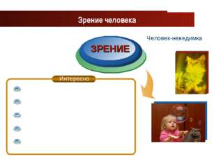 www.themegallery.com Company Logo ЗРЕНИЕ Зрение человека Человек-неведимка Co