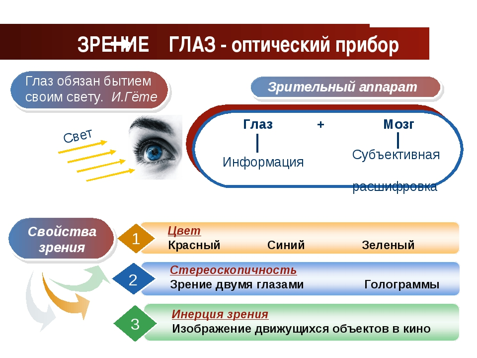 www.themegallery.com Company Logo ЗРЕНИЕ ГЛАЗ - оптический прибор Company Logo