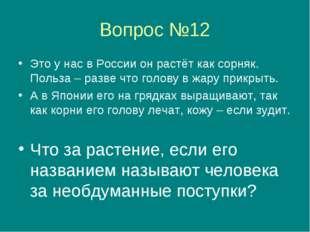 Вопрос №12 Это у нас в России он растёт как сорняк. Польза – разве что голову