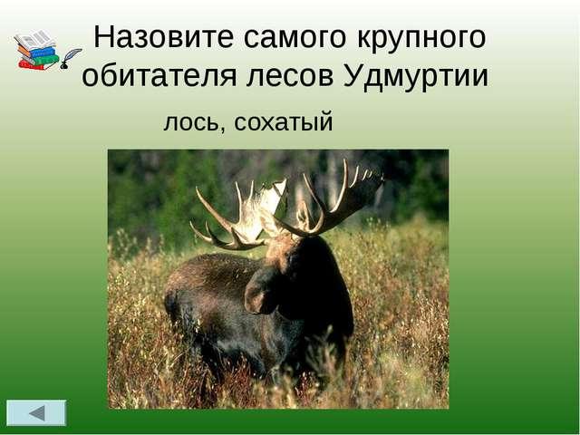 Назовите самого крупного обитателя лесов Удмуртии лось, сохатый