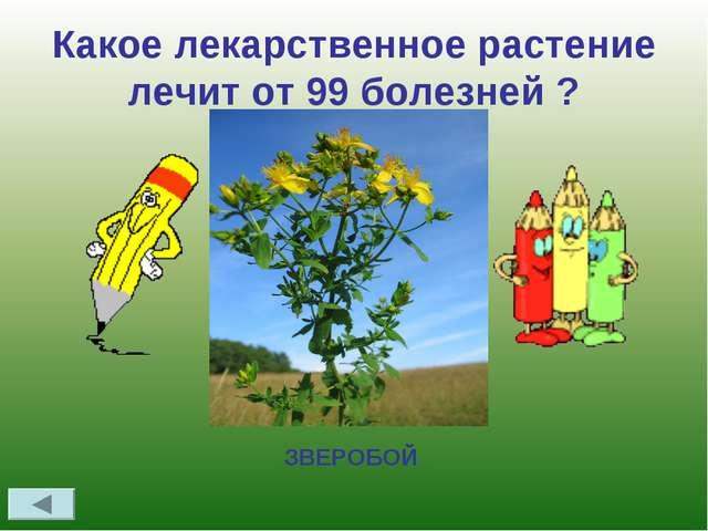 Какое лекарственное растение лечит от 99 болезней ? ЗВЕРОБОЙ