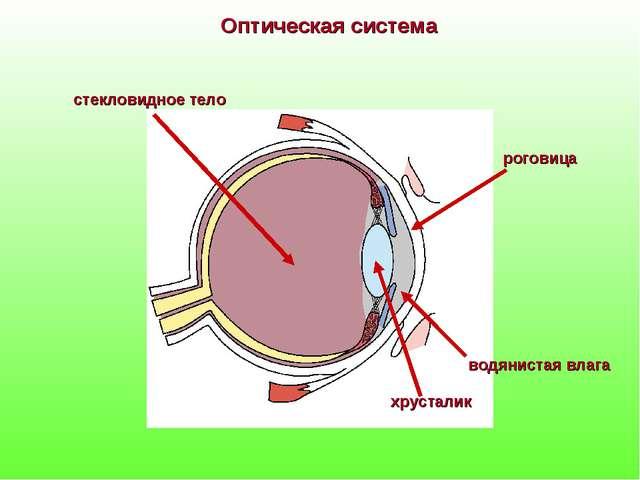 Оптическая система роговица водянистая влага хрусталик стекловидное тело