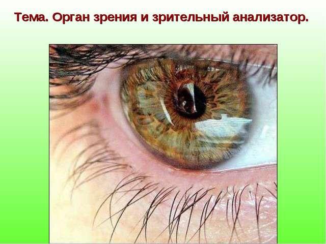 Тема. Орган зрения и зрительный анализатор.