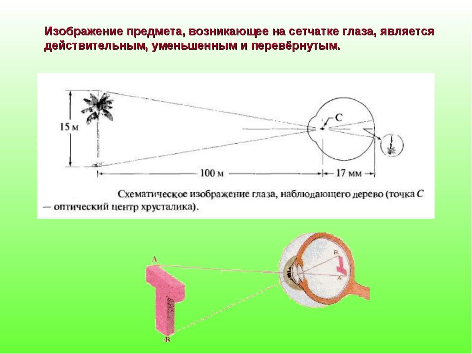 Изображение предмета, возникающее на сетчатке глаза, является действительным,...