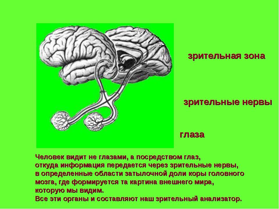 Человек видит не глазами, а посредством глаз, откуда информация передается че...